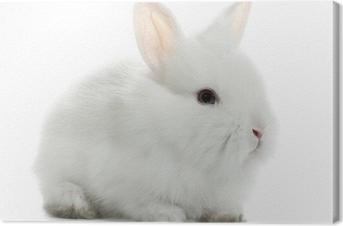 Quadro em Tela Rabbit bunny baby isolated on white background