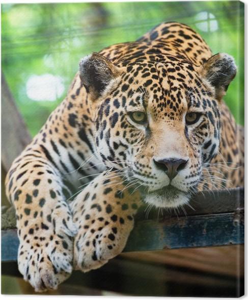 Quadro Em Tela South American Jaguar