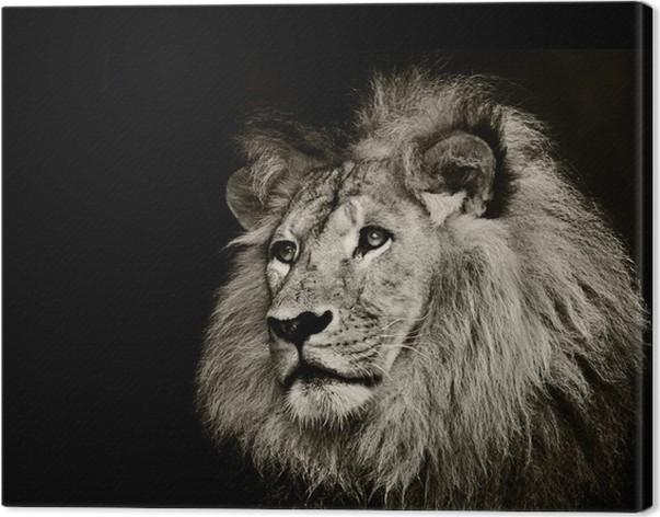 Quadro em tela strong lion u2022 pixers® vivemos para mudar