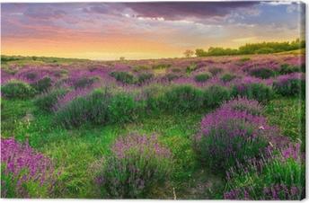 Quadro em Tela Sunset over a summer lavender field in Tihany, Hungary