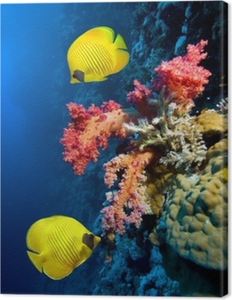 Quadro em Tela Underwater image of coral reef and Masked Butterfly Fish