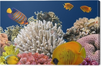Quadro em Tela Underwater life of a hard-coral reef, Red Sea, Egypt