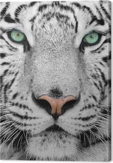 Quadro em Tela white tiger