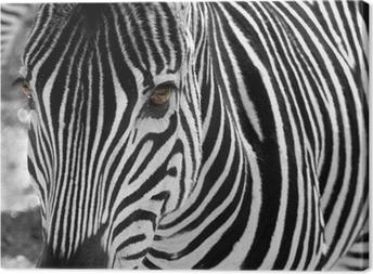Quadro em Tela zebra