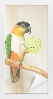 Raamsticker Black-headed Parrot