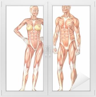 Wonderbaarlijk Sticker Menselijk Lichaam Anatomie - Mannelijke en Vrouwelijke JE-45