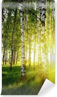 Samolepicí Fototapeta Břízy v létě lese