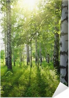 Samolepicí plakát Lesy letní bříza se sluncem