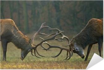 Samolepicí plakát Red deer boj