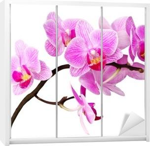 Schrankaufkleber Isoliert orchidee