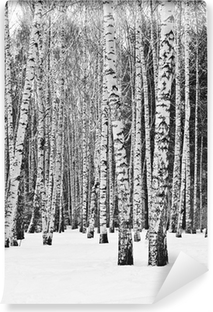 Selbstklebende Fototapete Birkenwald im Winter in schwarz und weiß
