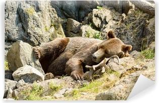 Selbstklebende Fototapete Braunbär (Ursus arctos)