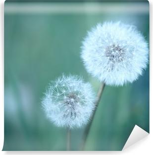 Selbstklebende Fototapete Dandelions