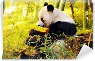 Selbstklebende Fototapete Große Panda sitzt auf dem Waldboden, der Bambus
