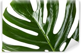 Selbstklebende Fototapete Grünes Blatt Monstera