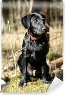 Selbstklebende Fototapete Labrador im Wald