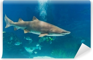 Selbstklebende Fototapete Sandtigerhai (Carcharias taurus) Unterwasser-Nahaufnahme portra