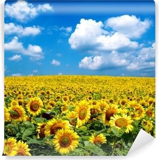 Selbstklebende Fototapete Sonneblumenfeld
