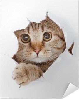 Selbstklebendes Poster Cat looking up in Papierseite zerrissenen Loch isoliert