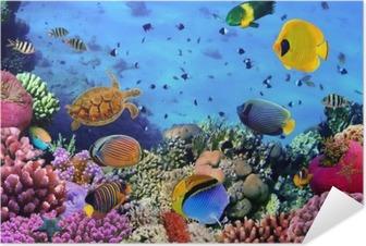 Selbstklebendes Poster Foto von einer Koralle Kolonie