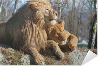 Selbstklebendes Poster Löwe und Löwin