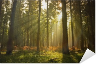 Selbstklebendes Poster Schöner Wald