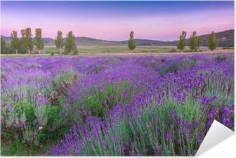 Selbstklebendes Poster Sonnenuntergang über einem Lavendelfeld im Sommer
