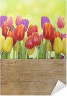 Selbstklebendes Poster Tulpen mit Holztafel