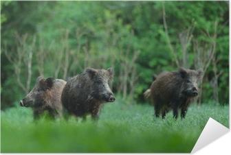 Selbstklebendes Poster Wildschweine mit Wald-Hintergrund