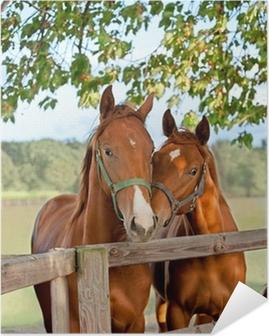 Selbstklebendes Poster Zwei Pferde im Fahrerlager