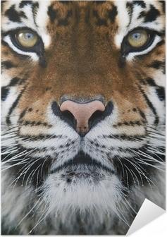 a tiger Self-Adhesive Poster