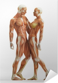anatomy couple Self-Adhesive Poster