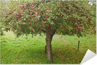 Apple trees orchard Self-Adhesive Poster