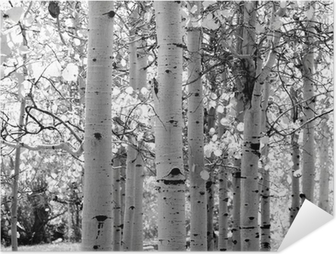 black and white image of aspen trees Self-Adhesive Poster