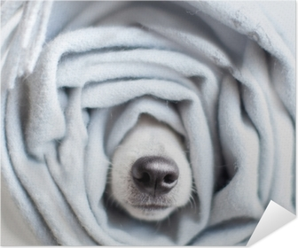 Dog wrapped in a scarf Self-Adhesive Poster