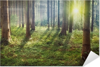Forest Sunset Self-Adhesive Poster