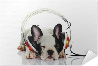 french bulldog with headphone isolated on white background Self-Adhesive Poster