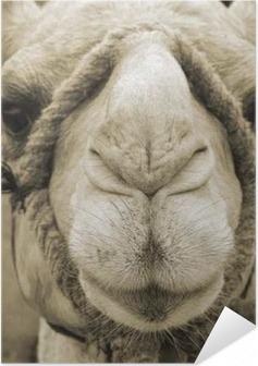 Kamelgesicht Self-Adhesive Poster