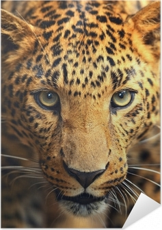 Leopard portrait Self-Adhesive Poster