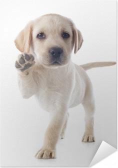 puppy labrador retriever Self-Adhesive Poster