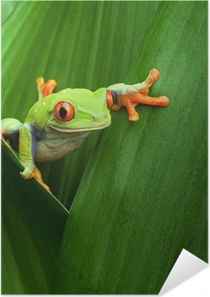red eyed tree frog Self-Adhesive Poster