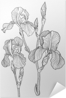 Sketch of bouquet of blooming irises Self-Adhesive Poster