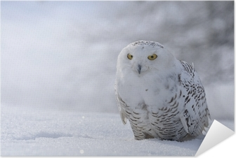 snowy owl sitting on the snow Self-Adhesive Poster