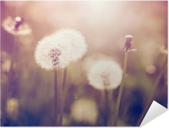Vintage dandelions on a meadow Self-Adhesive Poster
