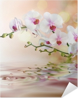 white orchids on water with drop Self-Adhesive Poster