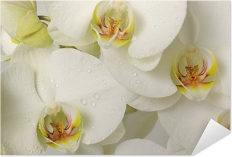 white orchids Self-Adhesive Poster