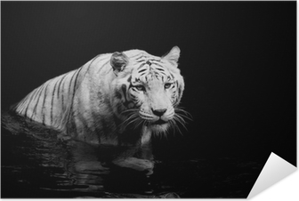 White Tiger Self-Adhesive Poster