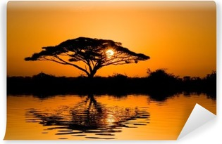 acacia tree at sunrise Self-Adhesive Wall Mural