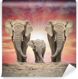 African elephant family on the road. Self-Adhesive Wall Mural