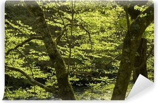 backlit spring trees and the little river Self-Adhesive Wall Mural